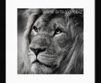 Черно белое фото лев, размер 60х60 см. Рамка натуральное дерево, покраска ма товый черный лак. Цена 20 $
