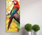 A parrot long. Размер 60х170 см. цена 35 у.е. Покрытие матовый или глянцевый лак