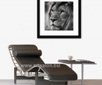 Black-and-white photo lion, size 60x60 cm. Frame natural wood, painting mat black lacquer. Price 20 $
