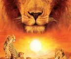 Poster Africa, wild cats