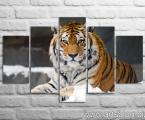 Tiger winter. Высота средней части может быть от 60 до 100 см.