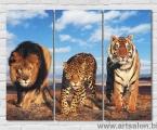 Wild cats, size 80х110 см