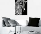 Zebra, size 60x80 cm. Цена 15 у.е.