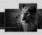 leopard black and white1 Размер 80х135 см. цена 30 у.е.