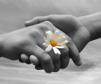 Love, hands, daisy