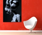 Black and white poster, size 60x80 cm