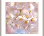 Delicate flower 04