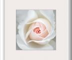 Delicate flower 12