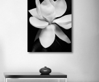 Poster-Magnolia-80x60-sm