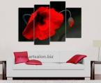 Red poppy1