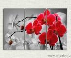 Modulnaya-kartina-krasnie-orhidei-cherno-beliy-fon-100x150-sm