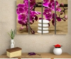 Orchid and stones-2