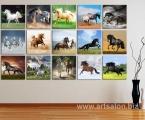 Collage horse3. Цена квадратных модулей зависит от размеров