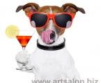 Funny-dog1